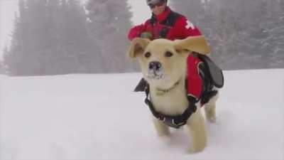 An avalanche rescue pupper's training day
