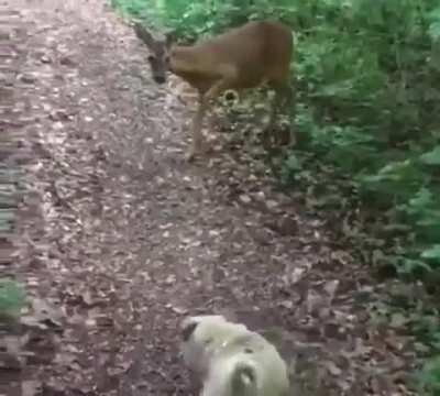 Bambi is evil