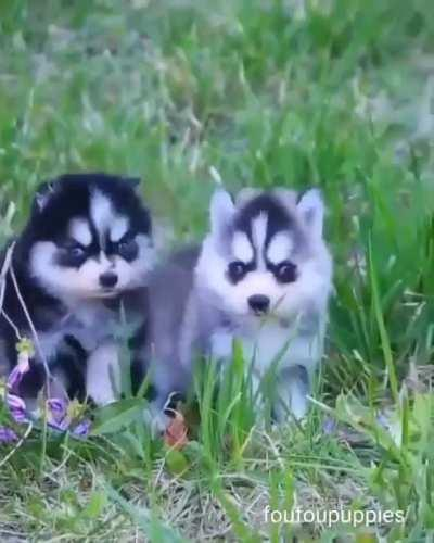 Cutest puppies ever !