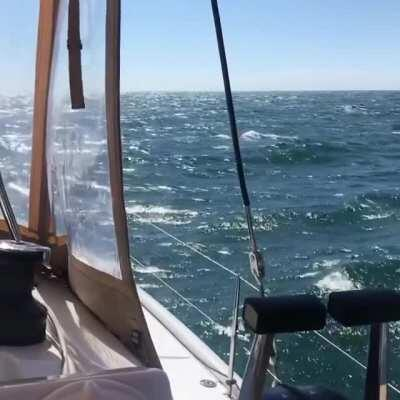 Crossing from Newport to Menemsha Sunday average 18 knot wind. FP 47 made an honest 8.5 knots on an amazing summer day.