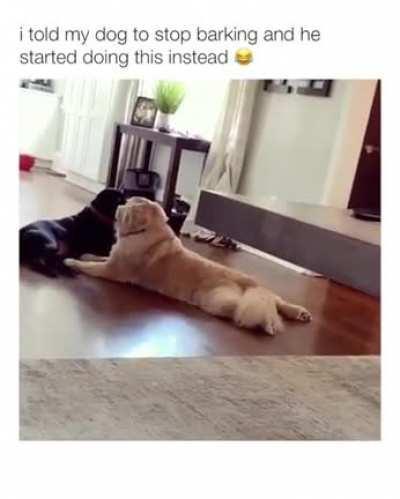 must not bark but must make noise