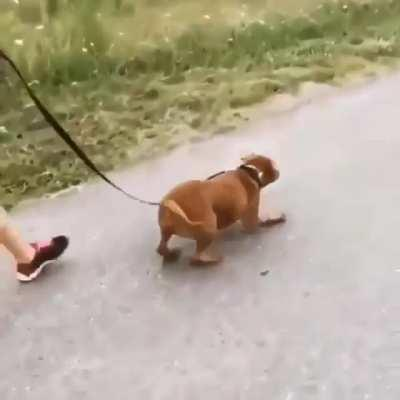 His first walk after being adopted