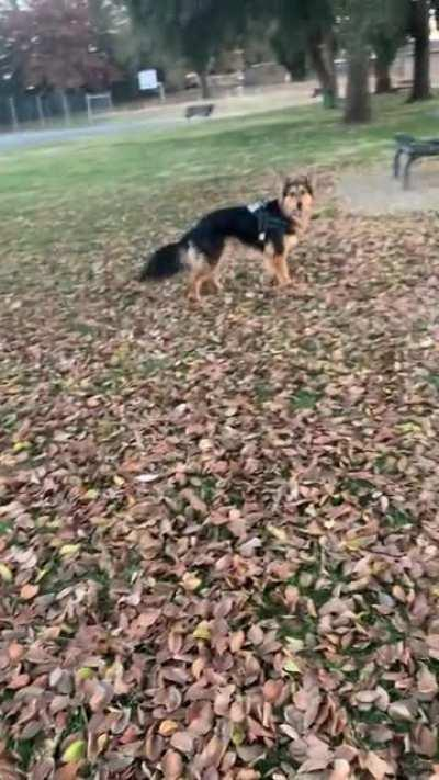His joy is contagious. Park time is the only time I'm not down in the dumps. This guy makes my life so happy. We rescued each other a year ago.