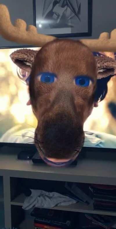 Moose filter