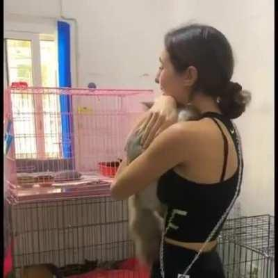 Woman from Beirut finally reunited with her cat