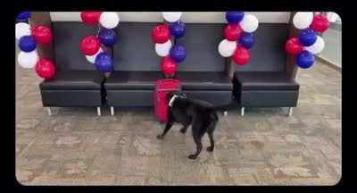 TSA throw a sniffer dog of 7 years a retirement party