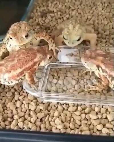 Multiple lizards die inside