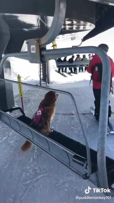 Skiing eye dog