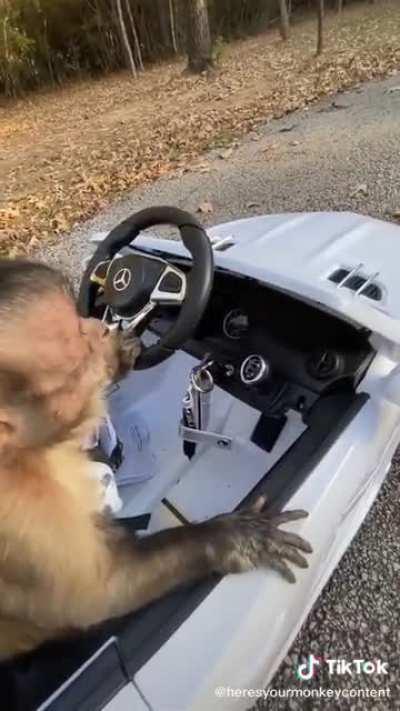 Monke learn to drive
