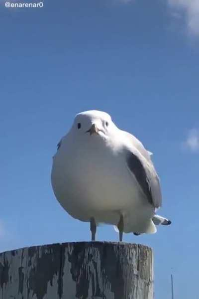 Seagull is scared