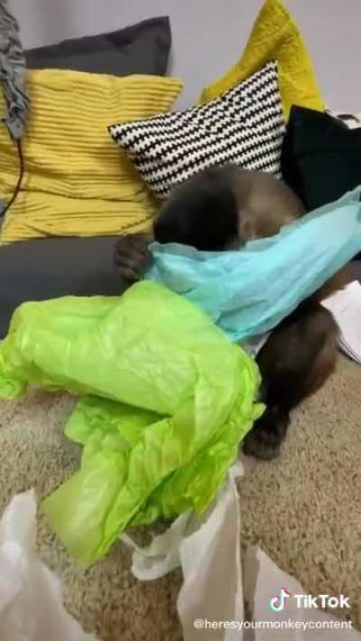 Monke use human for gifts