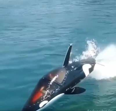 This Jet Powered Dolphin Submarine