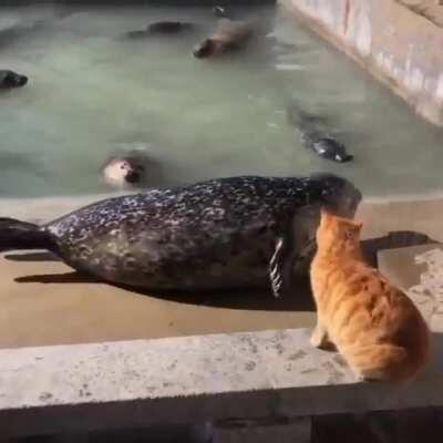 Punching a seal