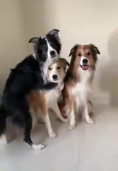 Dogs having a group photo