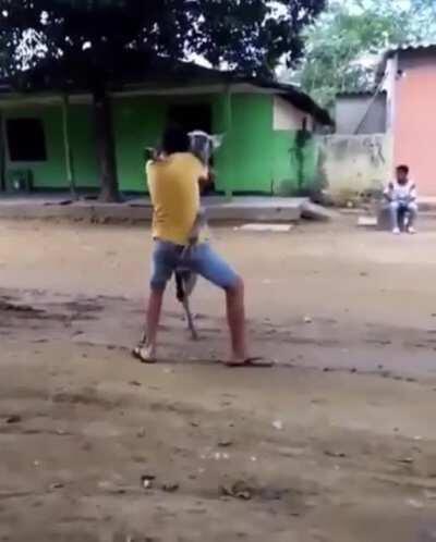 That donkey dances better than me