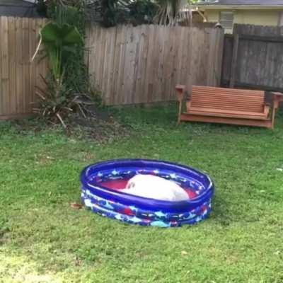 Hank playing in his new pool for the first time