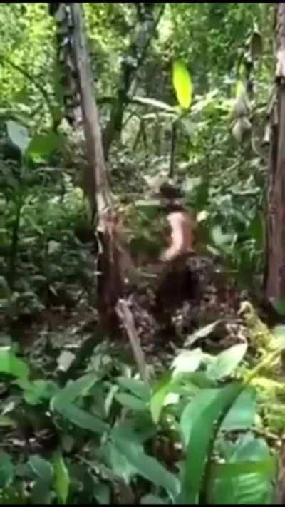Man vs Tree