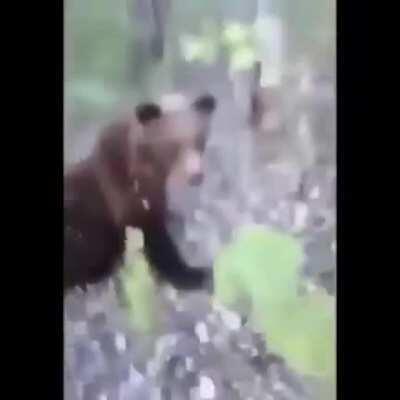 If I kick a bear