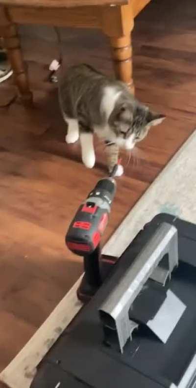 frankie is not a fan of drills