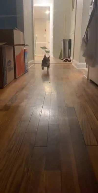 Vicious dog attack caught on camera