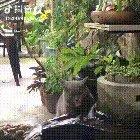 Cat.exe got stuck