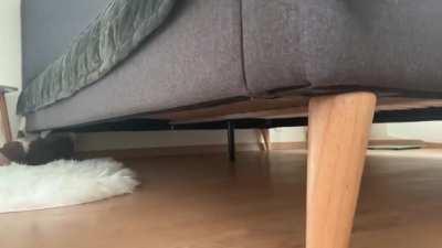 Spider-cat Spider-cat !!!!!