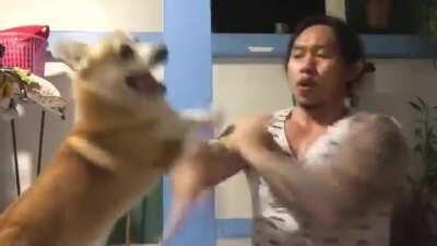 Kung fu Corgi
