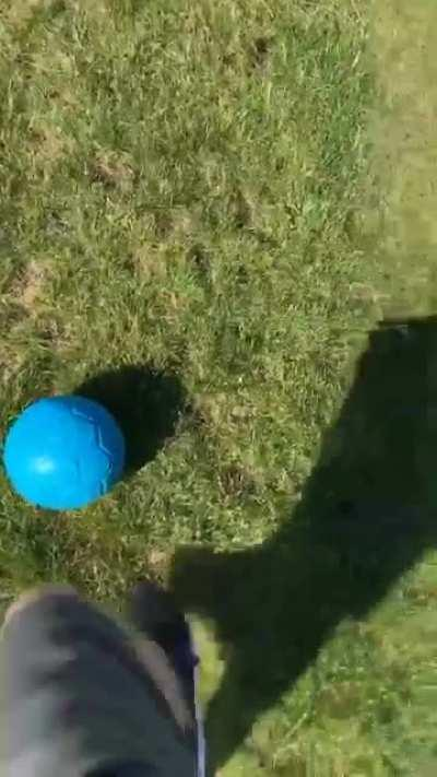 Today my dog accidentally became a soccer star, to the surprise of himself and us