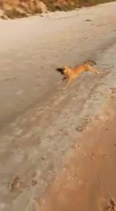 Good dog. Keep running...