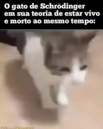 O gato acaba de vivorrer😎👌
