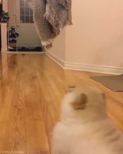 Pupper tries to jump