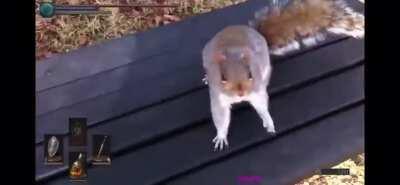 squirrel attack...