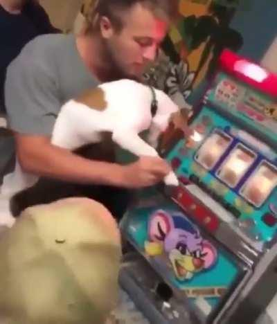 Dogs give us luck