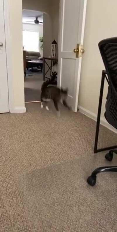 When Zoe hears the treat box shaking