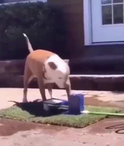 Poor dawg