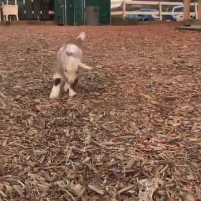 Happy hops