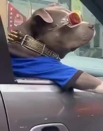 You might be cool... but you'll never be as cool as this good boy