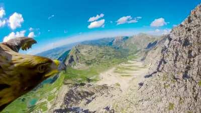 🔥 Breathtaking- Eagle flying over the Alps