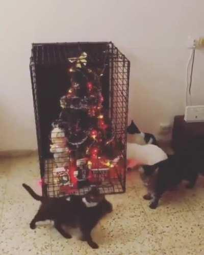 Tired of losing Christmas ornaments to your cat? There's only one solution.