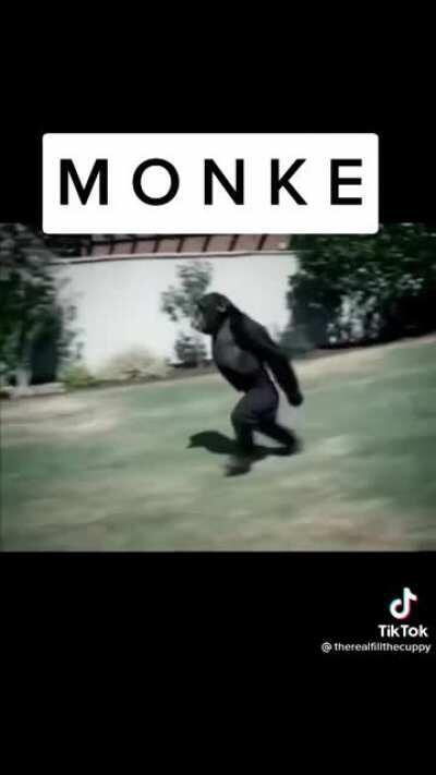Monke