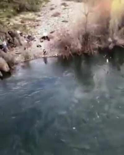 Woman rope jumps from a bridge and does a spectacular flip and dive