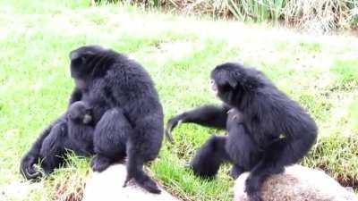 Funny monkey haha