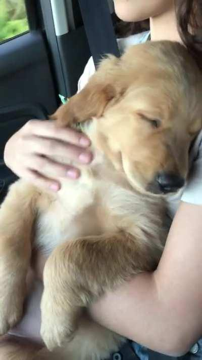 My sweet puppy sleeping in my girlfriend's arms while listening to country music 😍