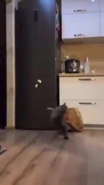 The cat didn't even know he could dance like that