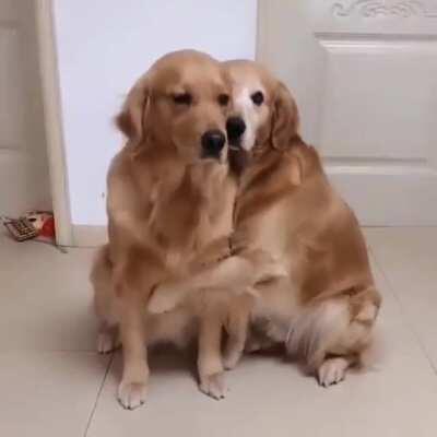 Golden love and warm hugs