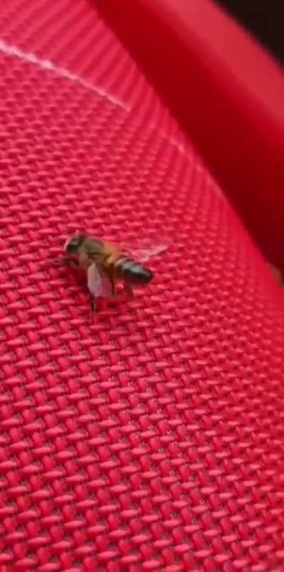 this bee's got talent 😳