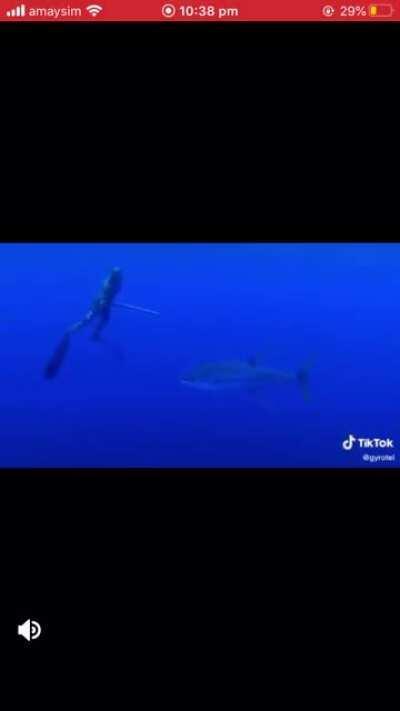 Underwater scream