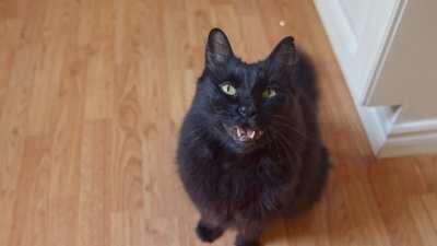 Cat Sings Paula Abdul's