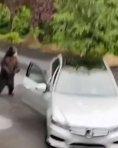 Mercedes new bear alarms