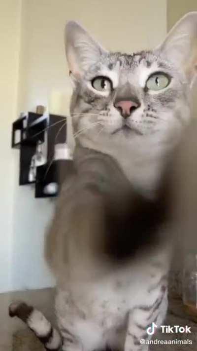 Cat wipe